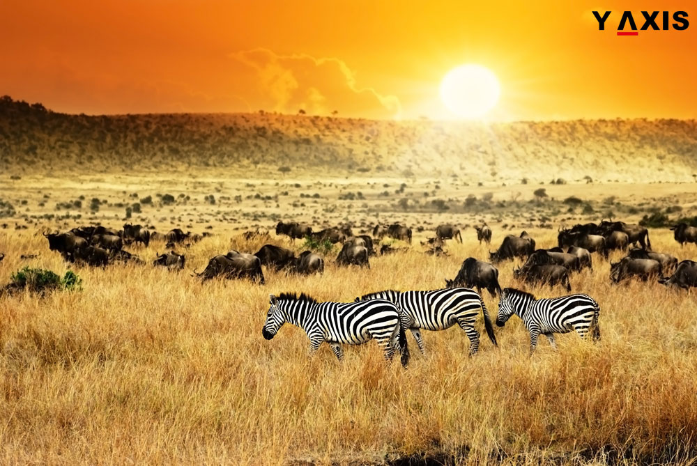 Kenya Immigration
